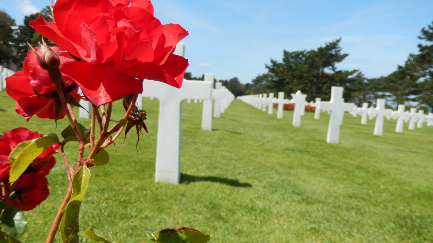 Image of Flower with Graves in Background